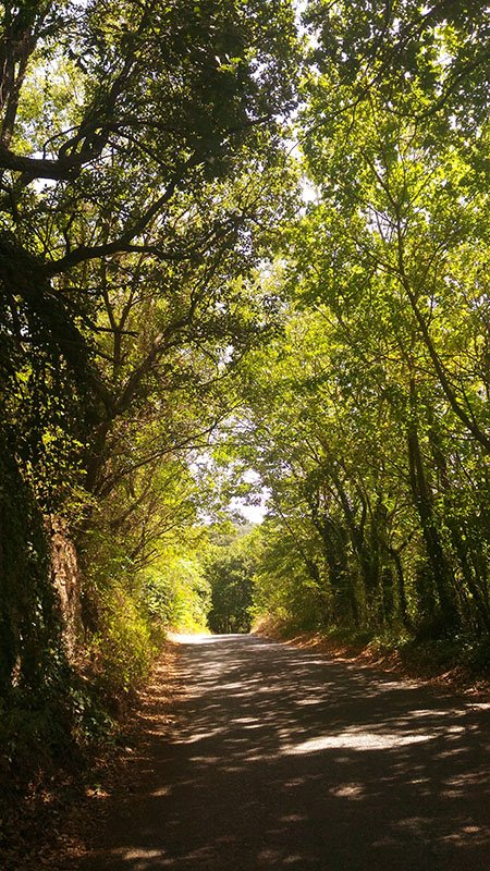 bolsena alberi permacultura