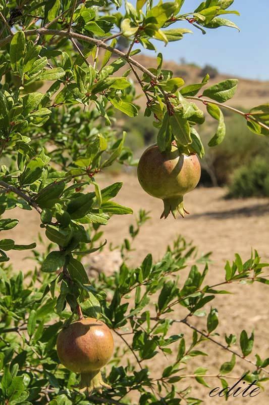 permacultura sicilia butera