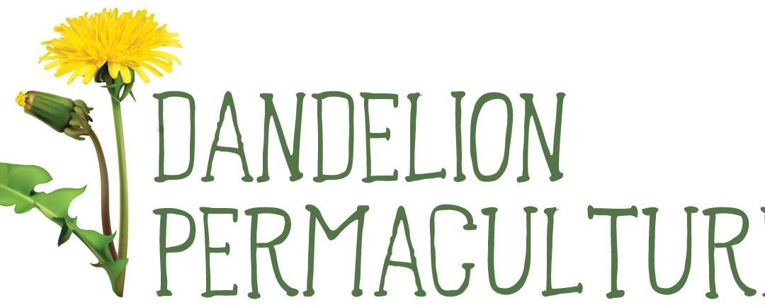 Dandelion Permaculture
