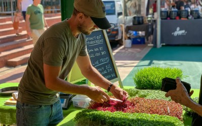 Giving Greens – Permaculture careers