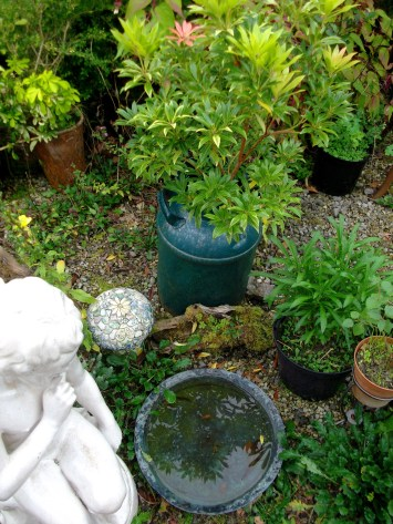 Sustainable growing at bealtainecottage.com 002