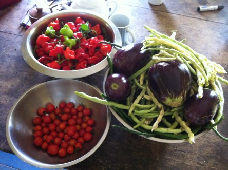 Harvest at Zaia and Tom Kendal's permaculture farm