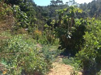 Looking into the Permaculture designed garden at Maungaraeeda, Sunshine Coast, diy food and health
