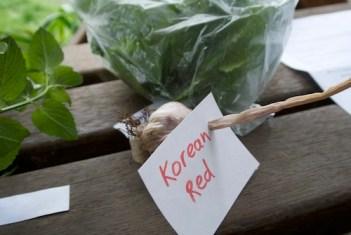 Korean Red