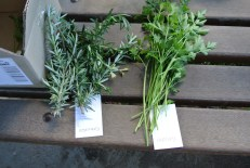 Rosemary and parsley