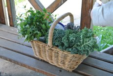 Kale and herbs