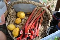 lemons_rhubarb
