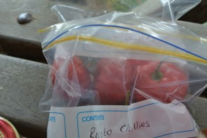 rocoto_chillies