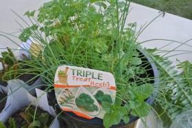 triple_herbs