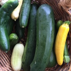 cucumbers_zucchinis2