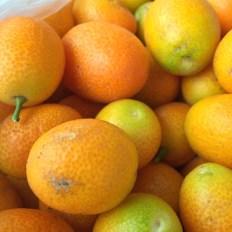 cumquats3