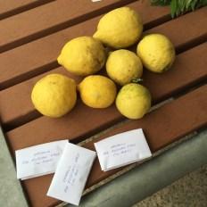 lemons_seeds