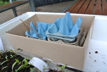 beetroot_seedlings3