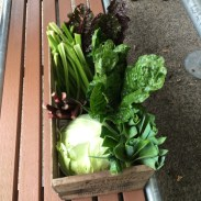 box_of_veges