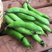 broad_beans