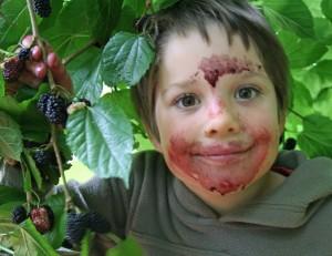 tom_mulberries_picking