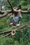 robert-hanging0005