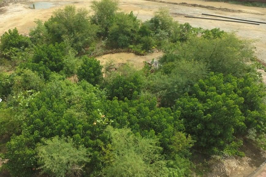 Forêt Miyawaki