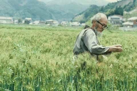 mistrz Masanobu w polu ryżowym rozrzuca kulki kolejnej uprawy