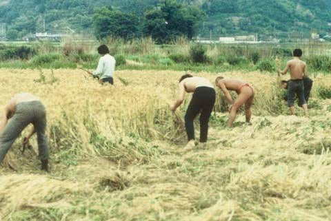 Fukuoka farm (5)