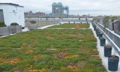 5 Boro Green Roof Garden on Randall's Island - April 18, 2013 (credit: Evan Bindelglass / CBSNewYork)