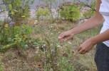 Wysiew nasion przez wykruszanie i rzucanie gdzie popadnie :).