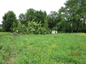 Tu będzie dom i ogród, a na razie jest lucerna i sad jesionowo-bzowy