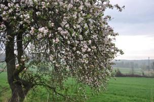 Wiosna na miedzy