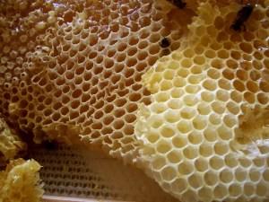 Natürliche Muster Honigwabe