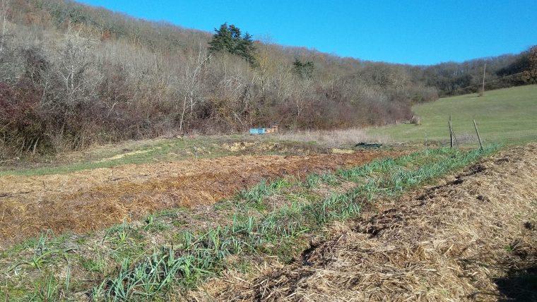 Jardin poireaux mulch fumier paille ruche
