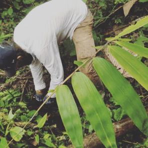 Giant_Bamboo_PermaTree-Ecuador