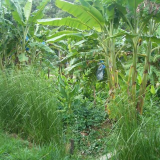 Minimise your footprint by becoming more self reliant through permaculture