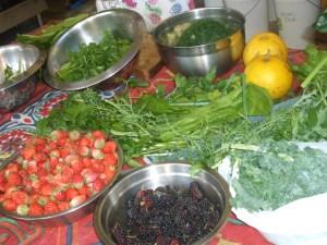 Harvest bounty
