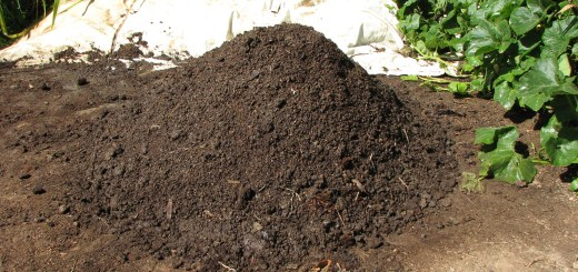 A rich dark compost from chook manure for our permaculture gardens