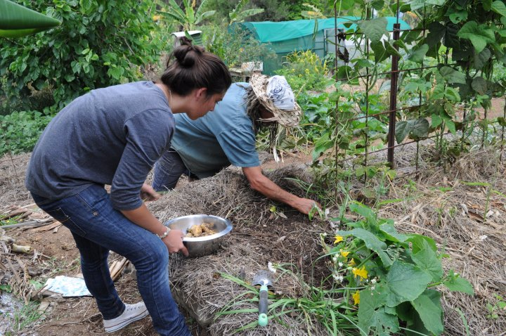 Planting in the permaculture kitchen garden