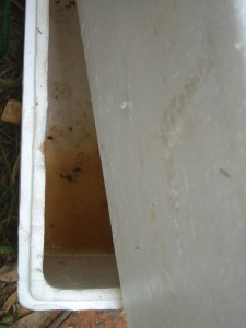 Worm juice in the bottom box of the worm farm