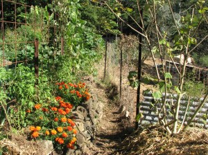 Future row vegie patch, currently chook pen