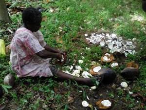 Copra harvesting in Vanuatu