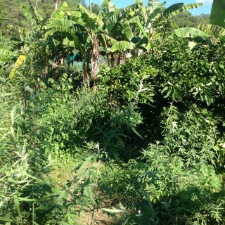 A look into the food forest at PRI Sunshine Coast.
