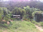 "Entrance to the kitchen garden at the Permaculture Research Institute ""Maungaraeeda"" Sunshine Coast."