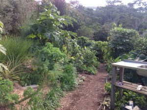 Entry to the kitchen garden at the Permaculture Research Institute Sunshine Coast.