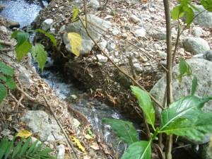 Wayter diversion for water taro in Tasmate