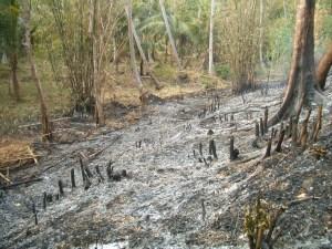 Burning off in Vanuatu