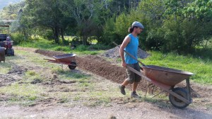 Making the ginger beds at Maungaraeeda