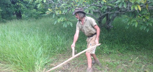 Tom Kendall uses a scythe at Maungaraeeda on the Sunshine Coast.