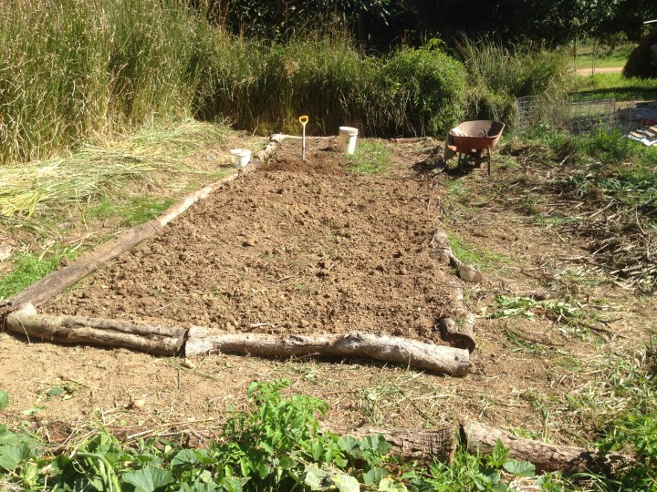 Tom kendall digs through his garden soil to prepare to grow pumpkins at Maungaraeeda.