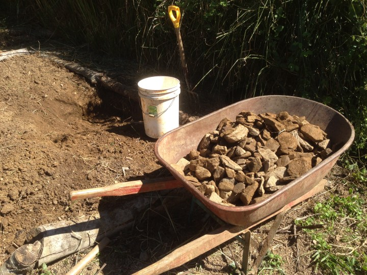 Tom Kendall digs stone out of his garden beds to improve the soil for growing pumpkins at Maungaraeeda.