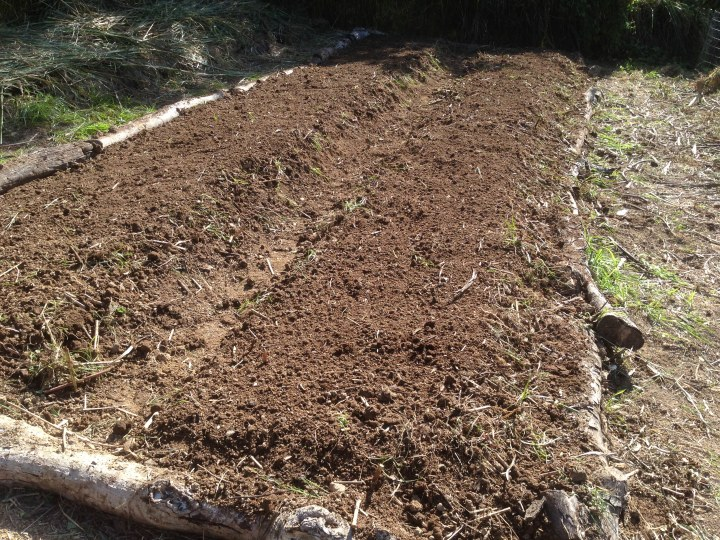 Tom Kendall uses composted manures to feed his soil at Maungaraeeda.