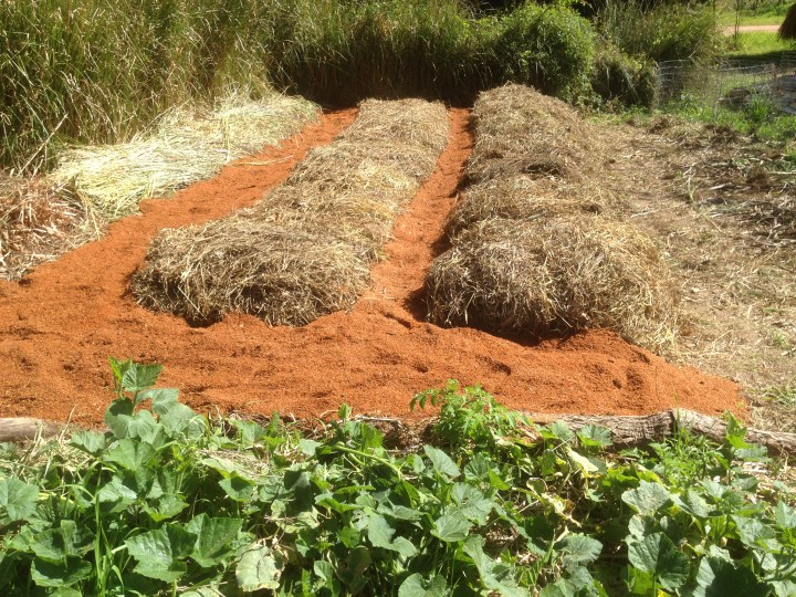 Tom Kendall mulches his garden paths with sawdust at Maungaraeeda.