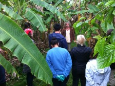 Permaculture Design Certificate course PDC course Day 2, entering the food forest at Maungaraeeda